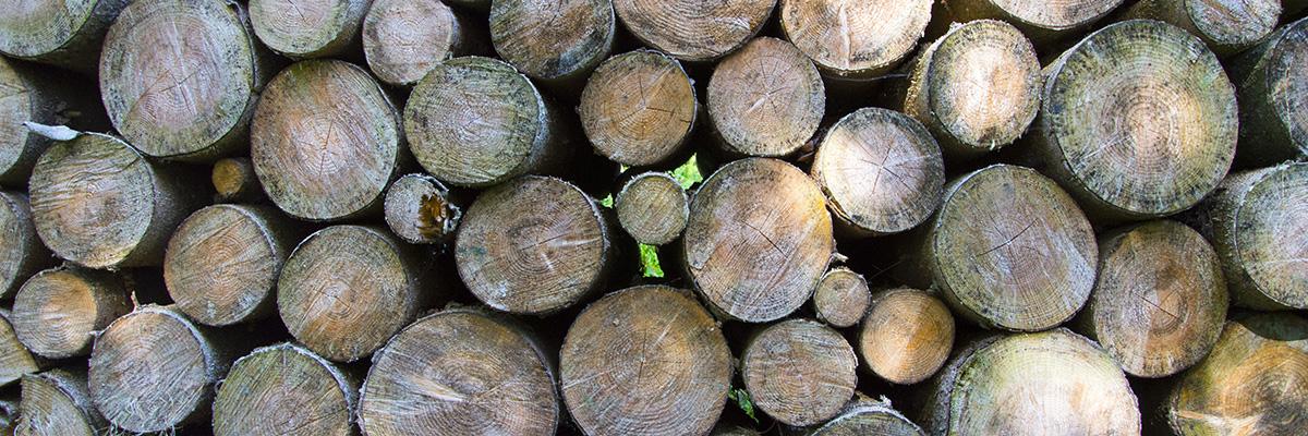 Trä är ett välanvänt energimaterial.